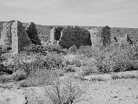 Desert Lab Collection